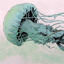 Beautiful jellyfish illustration from Señor Salme.