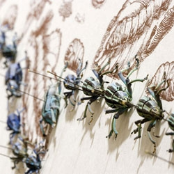 "Jennifer Angus's show ""All Creatures Great and Small"" at LA's Craft and Folk Art Museum uses nearly 5,000 insects."