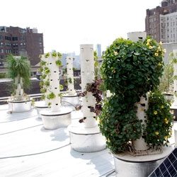 John Mooney's rooftop hydroponic vertical farm is located above his restaurant Bell, Book, and Candle.