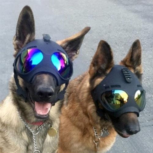 K9 Helm 'head protection for working dogs' Trident Helmets.