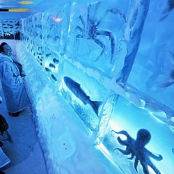 What the -- Kesennnuma frozen aquarium in Japan. So weird!