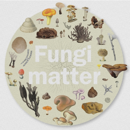 Trunk's Layla Atkinson has created a wonderful short film about the importance of fungi, for the Royal Botanical Gardens, Kew.