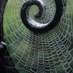 Exquisite picture of a spider web on a gate. Kindra Clineff shows nature demonstrating that it can compete on an architectural level as well as making man-made designs look much better.