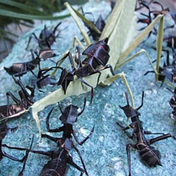I love the photography of  these Kiri-Origami or cut and folded paper insects by Japanese artist  Taketori.