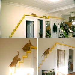 Love the idea of the kitty track ~ simple, colorful, making use of unused space for the cats around the apt - Bill and Maria, founders of Uhuru Design