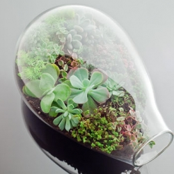 San Francisco based Botany Factory makes amazing succulent terrariums in hand-blown glass vessels. Their production is like a science experiment, albeit one conducted with color, texture and visual composition.