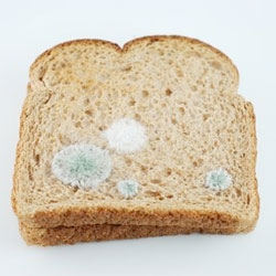 Moldy toast? Not quite, it's a bit of toast embroidery from Judith G. Klausner.