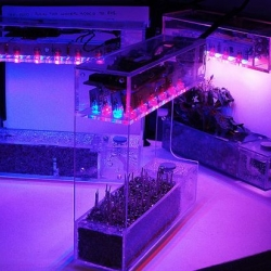 "World's smallest automatic hydroponic gardening system offers fresh greens. ""LabBox Grower"" from PocketGrow."