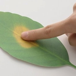 Leaf, designed by Hideyuki Kumagai, is a thermometer made from color-changing paper.