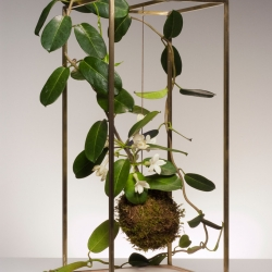 Plant Bondage is a minimalist design created by York-based designer Light + Ladder.