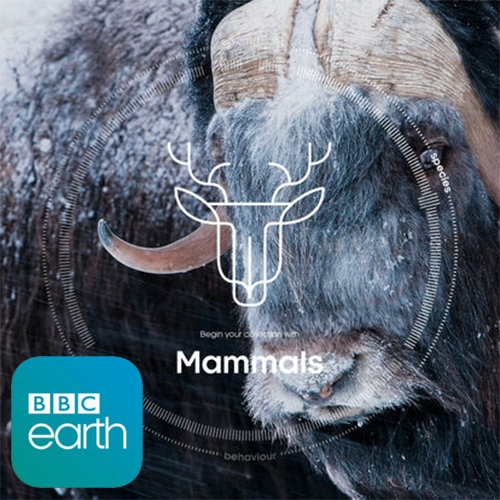 Sir David Attenborough's Story of Life App - explore more than 1000 of Sir David Attenborough's most memorable moments from his 60-year career exploring the natural world. On Google Play and Apple iOS.