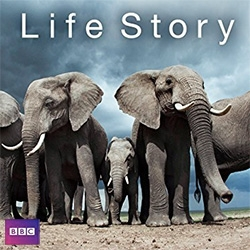 BBC Life Story narrated by David Attenborough - another incredible look into the animal kingdom. Beautiful! The team spent 1900 days filming the series, in 29 countries across six continents and created 1800 hours of footage.