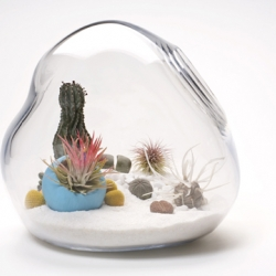 Terrariums from Litill Ltd. are as cute as they are lovely.