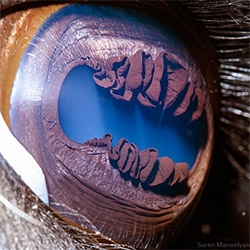 Suren Manvelyan has incredible close up looks at animal (and human) eyes... that's a llama!
