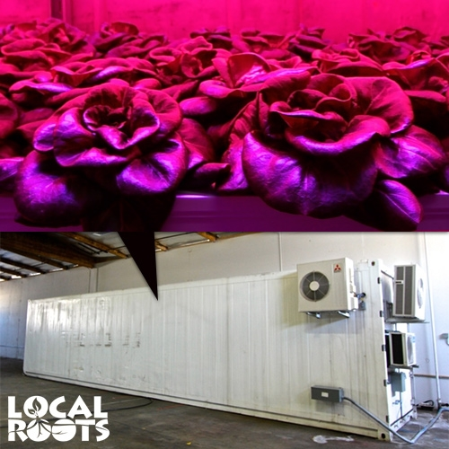 Local Roots - interesting LA based shipping container produce farming ideal for urban food deserts.