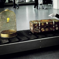 Collection of creative actions on mats made of supermarket and airports.