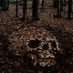 A temporary installation of leaves made by Skull-A-Day's Noah Scalin at a mountain retreat.