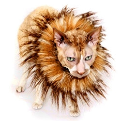 Wow. Mini Manes... if your cat needs that lion look...