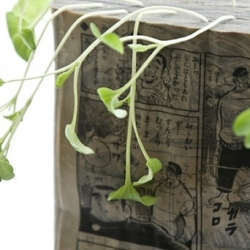 "Tokyo-based artist Koshi Kawachi recently demonstrated his ""Manga Farming"" technique — which uses old manga as a growing medium for vegetables. This crop of radish sprouts are an installation at the Matsuzakaya department store."