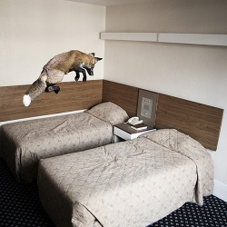 Animalia! A fantastic series of photographs of animals in urban environments by Mikel Uribetxeberria.