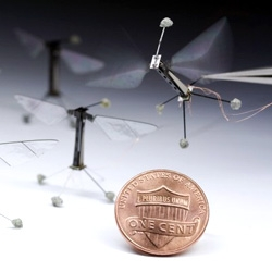 Researchers have built a miniature flying robot based on Drosophila. Muscles made from a piezoelectric material, which changes shape when a voltage is applied make the wings beat fast enough for flight.