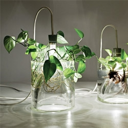Vase & Leuchte by Miriam Aust. Gorgeous mix of houseplants and lighting.
