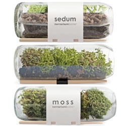 Potting Shed Creation's recycled wine bottle terrariums ~ growing horizontally with moss or sedum.