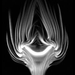 Inside Insides by Andy Ellison is a collection of GIFs, high res images, and interactive visuals all of food and plants made on an MRI machine.