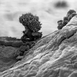 michael oliveri's nano-scale landscape photography shows an amaizing look of our world