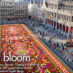 A gigantic medevial persian carpet was arranged on the square in Brussel. Close to a million begonia flowers was used!