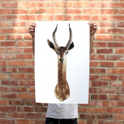 """Preserved"" is a series of prints by Print Studio Shop documenting vintage taxidermy animals. The series further preserves each animal in print and tells the story of their present day existence."