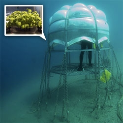 Nemo's Garden - i'm fascinated by this italian project for underwater greenhouses! Sergio Gamberini's vacation inspired research project the last few years.