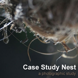 j.frede's Case Study Nest ; A Photographic Study of birds nests - April 2010