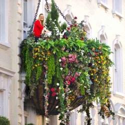 The world's largest hanging basket created to launch new boutique hotel Hotel Indigo in London Paddington