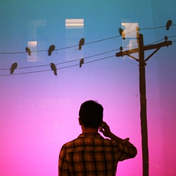 'Bird on a Wire' is a projected interactive display created for a pair of storefront windows in Manhattan. A passerby can call a number to set birds on telephone wires into motion while listening to their flocking sounds on a cellphone.