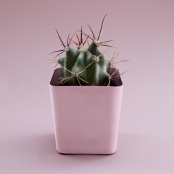 Succulent Study - A new series by Becca Ewing.
