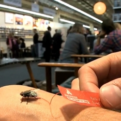 To promote their exhibition stand at the Franfurt Book Fair, Eichborn the publisher with the fly prepared 200 flies with an ultra light banner.