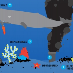 An impressive interactive infographic designed by Jason Bishop (jasonbishop.net) for the NRDC that explains the affects of the Gulf Coast oil spill on marine life and the ocean