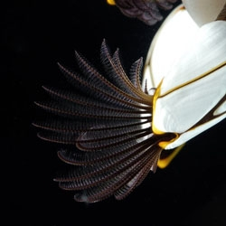 This goose barnacle is one of many creatures featured in this NYtimes's A Marine Life Encyclopedia slideshow.