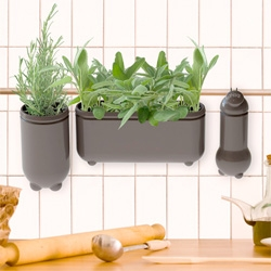Studio Klass' Flying Green Fresh Spice Vases ~ so versatile and modular to be arranged and hung throughout your kitchen, etc!