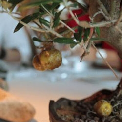 Caramelized Olives served on bonsai trees and 13 more culinary and visual delights at the El Celler de Can Roca, the world's 2nd best restaurant in the world in 2011.