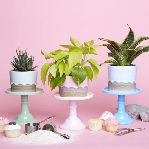 Exclusive collection of cake like ceramic pots for The Sill by Brian Giniewski! Amazing colors and photography for these beautiful hand thrown plant pots!
