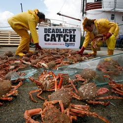 A real accident caught on tape, or a contrived viral video by Discovery Channel to promote the new season of Deadliest Catch? Either way, fun chaotic video of crabs...