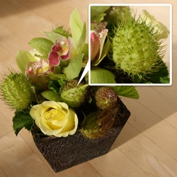 Monkey Balls! Surprise birthday floral arrangement just came, and i'm totally mesmerized by these things... what IS it?