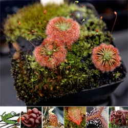 "Coolest carnivorous plants i've ever seen - a close up look at California Carnivores - ""the largest carnivorous plant shop in the united states"" ~ absolutely amazing."