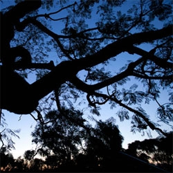 Sun Stalking ~ a look at jetlag/insomnia inspired sunrises across Los Angeles this morning
