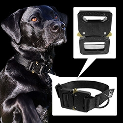 Defy Bags Otis Dog Collar (on Bucky!) - complete with AustriAlpin Cobra Load Bearing Quick-Release Buckle, which can support 2,000 lbs. These are the same solid steel & brass imported buckles used by U.S. Special Forces.