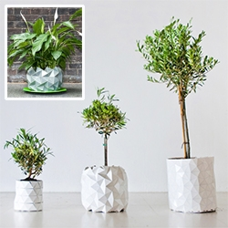 Growth by Studio Ayaskan. Lovely how this planter will grow and expand with your plant. Though i'd imagine you'd need to be adding dirt along the way for healthy growth!