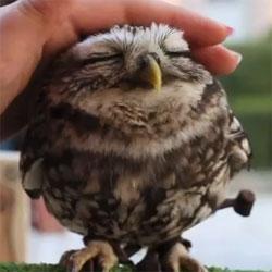 Lovely Owl by Mr Nura-T.