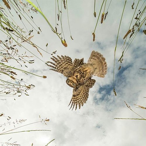 British Wildlife Photography Awards Winners 2016. So many incredible, inspiring shots. Particularly loving this owl image from Jamie Hall.